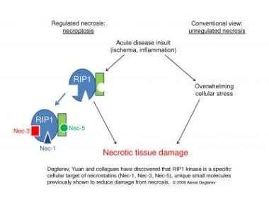 Inhibitors to RIP1 Kinase