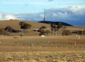 Kangaroos Canberra
