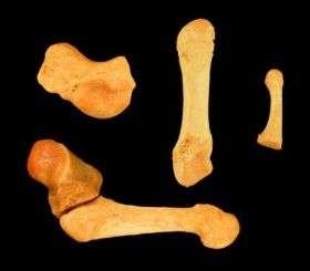 Lemur's Little Finger Poses a Mystery