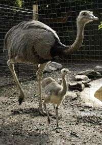 Male bird at Smithsonian's National Zoo has special reason to celebrate Father's Day