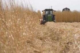 Miscanthus Harvest