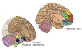 Neuroscientists Identify Brain Regions Responsible for Warding off Negative Emotion