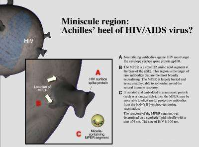 New picture of HIV-1's protein jacket identifies target for antibody-based vaccine