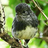 Native birds feel no fear when facing foes