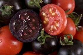 Purple Tomatoes (Cut)