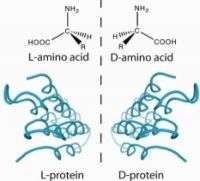 'Snow flea antifreeze protein' could help improve organ preservation