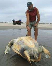 Study finds high mortality of endangered loggerhead sea turtles in Baja California