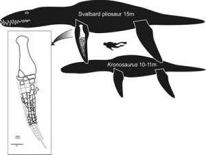 Team announces discovery of massive Jurassic marine reptile