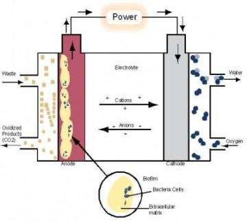 The Inner Life of a Microbial Fuel Cell