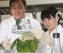 Tobacco plants may provide virus cure