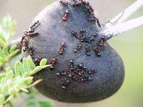 Trees, Ants and Elephants: Balance Gone Bad