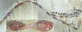 Unique fossils capture 'Cambrian migration'