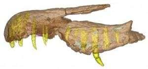 Unusual fish-eating dinosaur had crocodile-like skull