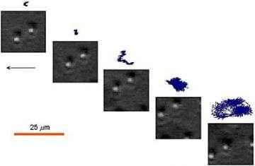 Videos Extract Mechanical Properties of Liquid-Gel Interfaces