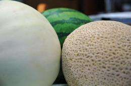 Melon research sweetened with DNA sequence