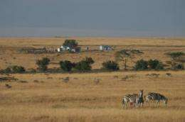 New study shows widespread and substantial declines in wildlife in Kenya's Masai Mara