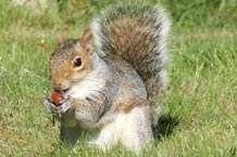 Study sheds light on squirrel psychology