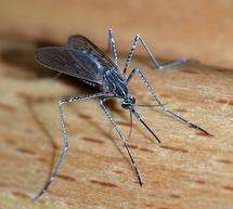 Drug-resistant malaria has emerged in Cambodia