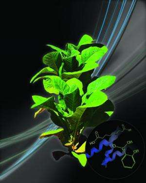 Researchers unravel role of priming in plant immunity