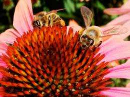 Study finds bees can learn differences in food's temperature