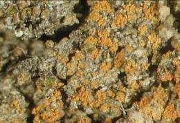 UC Riverside researcher names lichen after President Barack Obama