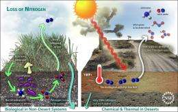 Climate Change, Nitrogen Loss Threaten Plant Life in Arid Desert Soils