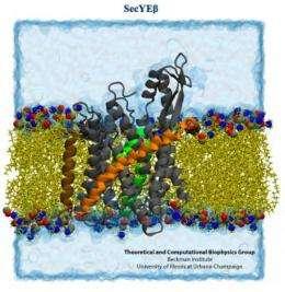 Computational microscope peers into the working ribosome