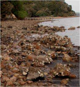 Invasive species threaten critical habitats, oyster among victims