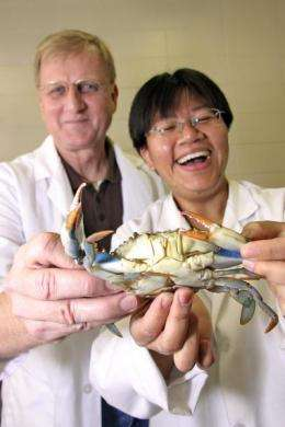 Research could boost coastal economics with crustacean molting on demand