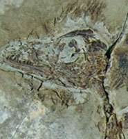Origin of birds confirmed by exceptional new dinosaur fossils