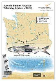 Salmon migration mystery explored on Idaho's Clearwater River