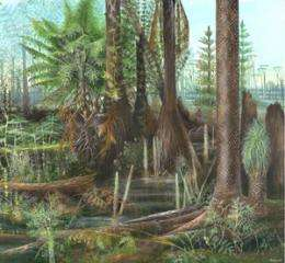 Ancient rainforests resilient to climate change