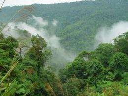 A view of a lowland rainforest on Sumatra, Indonesia