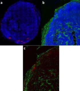 Bellamkonda Histological Slices