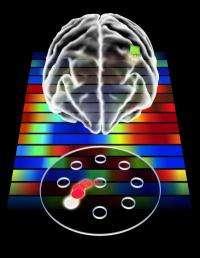 Brain develops motor memory for prosthetics, study finds