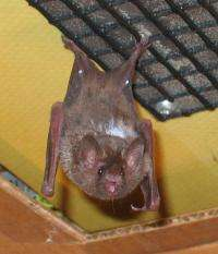 Brown-led team offers first look at how bats land