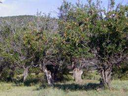 Conserving historic apple trees