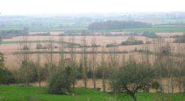 Fields of miscanthus in the English landscape