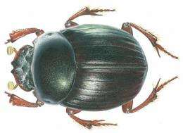 Dung beetle named after Darwin