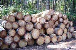 Energy consumption makes Spanish forestry unsustainable