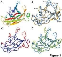 EphA4 -- the molecular transformer