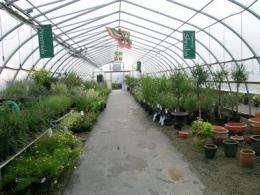 Experts: Disease-resistant plants enhance profits, client satisfaction