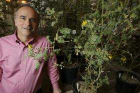 Figuring out green power -- scientists speed up discovery of plant metabolism genes