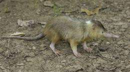 Researchers help save rare venomous mammal from extinction