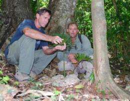 Guam Navy and University of Guam partner to conserve native tree