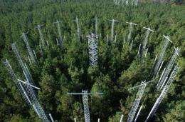 Higher carbon dioxide may give pines competitive edge