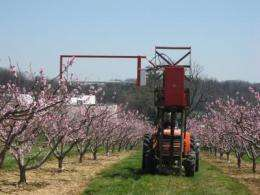 Horizontal string trimmer reduces labor costs, increases peach size