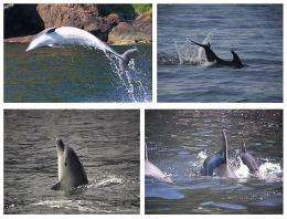 Human language and dolphin movement patterns show similarities in brevity