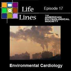 Inhaling a heart attack: How air pollution can cause heart disease