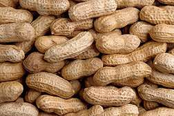 Microwave Meter Measures Moisture and Density of In-Shell Peanuts